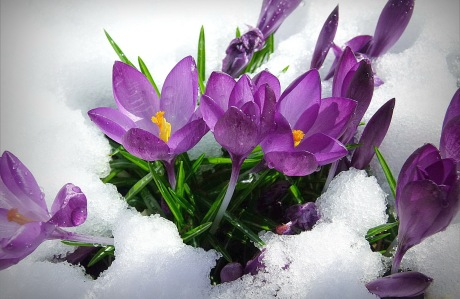 nature-landscapes_other_spring-flowers_21491